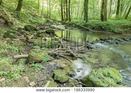 A river flows through the pristine beauty of a green european wood forest.
