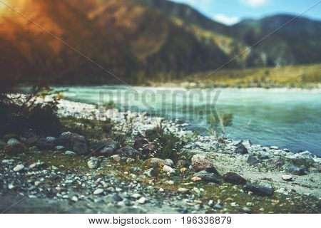 True tilt-shift view of stones of different colors and flowers on the coast line in front of mountain river Katun with hills and mountains in defocused background Altai Russia Kuyus district