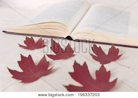 Red maple leaves lie in front of an open book. The concept of starting education and returning to school