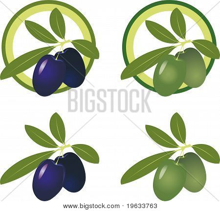 green and black olives. Vector Icon Set