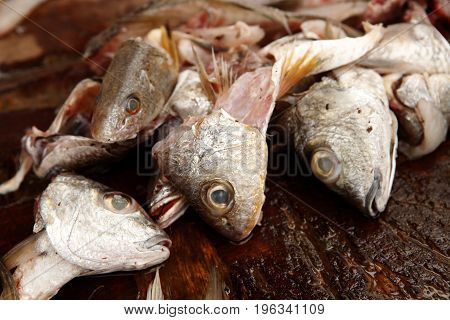 Cleaning Fresh Fish
