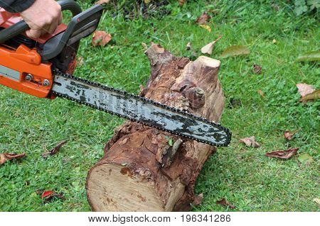 Lumberjack cutting wood with a chain saw