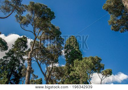View of pine treetops in the Villa Borghese park on a sunny day in Rome, the incredible city of the Ancient Era, known as
