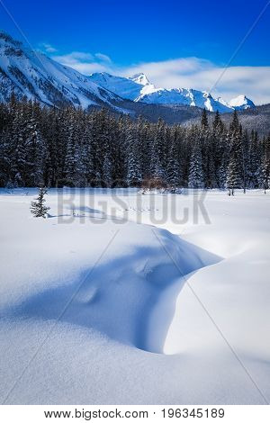 Snow Covered Meadow In Peter Lockheed Provincial Park, In The Ca