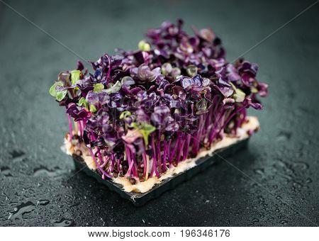 Cress On A Slate Slab (selective Focus)