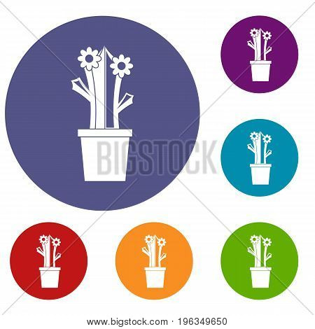 Flowering cactus icons set in flat circle red, blue and green color for web