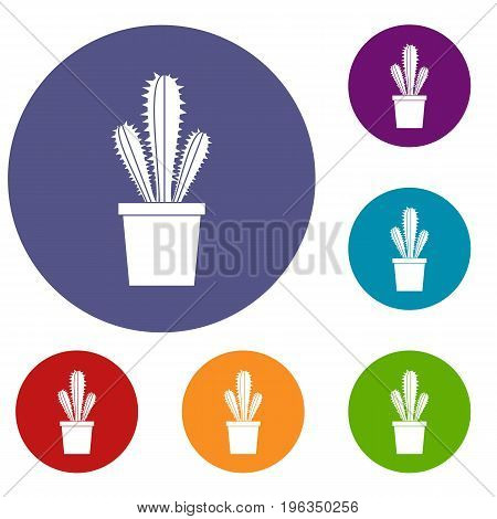 Cactus in flower pot icons set in flat circle red, blue and green color for web