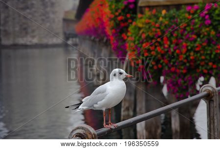 Seagull perched on railing at Lake Lucerne