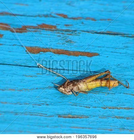 fishing hook with grasshopper. Fishing for insects