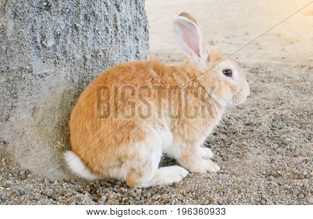 Brown adorable rabbit sit on ground. cute rabbit