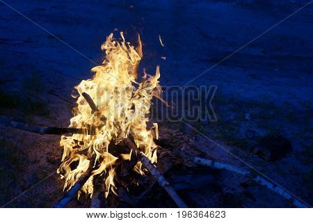 Bright Flame Of Fire From Birch Bark And Firewood In The Evening Forest