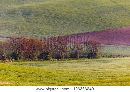 South Moravian fields, moravia, rows, czech republic, moravian landscape