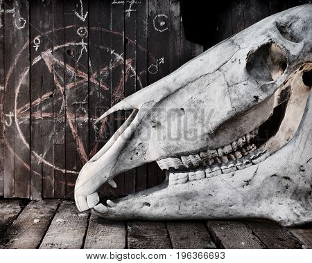 Scary horse skull against the background with pentagram. Mystic still life with scary occult objects, horror Halloween and black magick concept