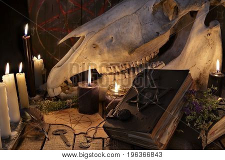 Horse skull, evil book and magic objects. Mystic still life with scary occult objects, horror Halloween and black magick concept, fortune telling or divination rite