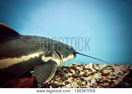 The Fish In The Aquarium