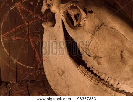 Scary horse skull against background with pentagram. Mystic still life with scary occult objects, horror Halloween and black magick concept.