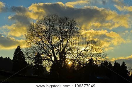 Backlit tree at sunset in autumn Switzerland