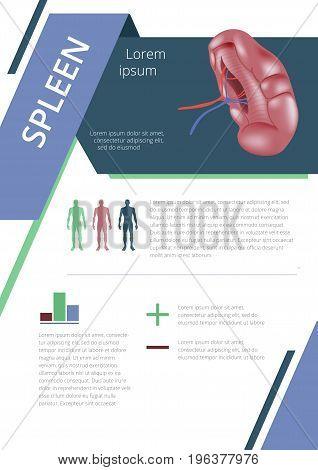 Internal human organs infographic. Medicine poster. spleen Medical brochure template. Vector illustration