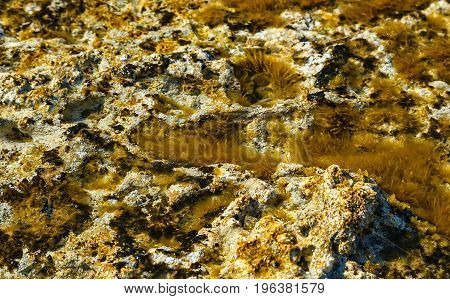 Green background of algae seaweed. Stone with bright seaweed closeup. Natural velvet texture of sea grass. Sea plant close image. Seaside rock texture.