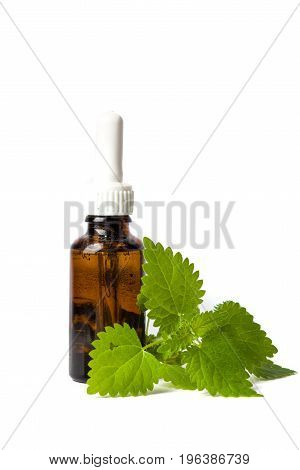 Stinging Nettle Leaves And Tincture Isolated