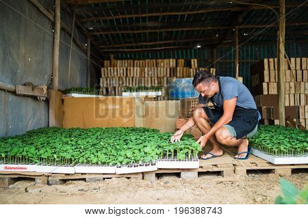 Man Farmer Holding Tray Of Seedlings On The Farm