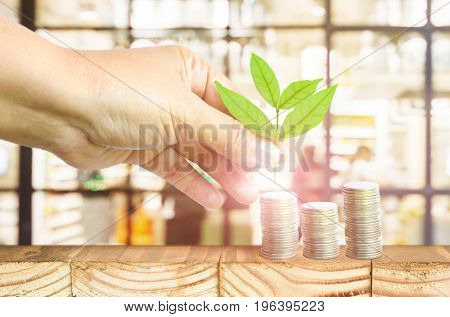 Close-Up Of Female Hand Pick Up The Leaf On The Coin With Office Blur Background Business Finance And Money Concept Business Investment Growth Concept