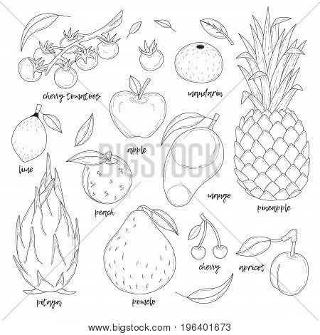 Set of hand drawn fruits with inscriptions. Transparent background.