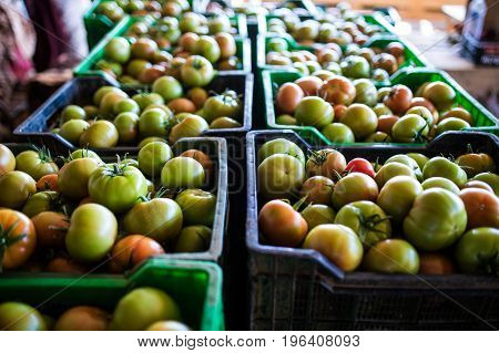 Fresh Healthy Tomatoes Being Stocked In Plastic Boxes