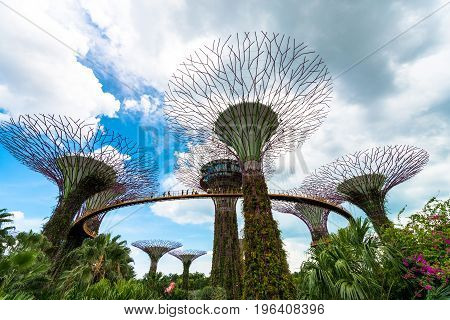 SINGAPORE - MARCH 22 2017: Wide angle view of Supertree Grove at Gardens by the Bay Park in Singapore. Futuristic art.
