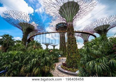 SINGAPORE - MARCH 22 2017: SINGAPORE - MARCH 22 2017: Wide angle view of Supertree Grove at Gardens by the Bay Park in Singapore. Futuristic art.