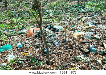 Garbage in the forest. Nature pollution. Litter.