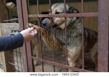 Dog gives a paw to human in the shelter for homeless animals