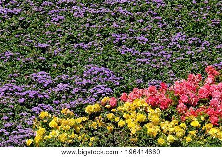 Colorful bright flower bed. Island of Mainau, Germany, Europe