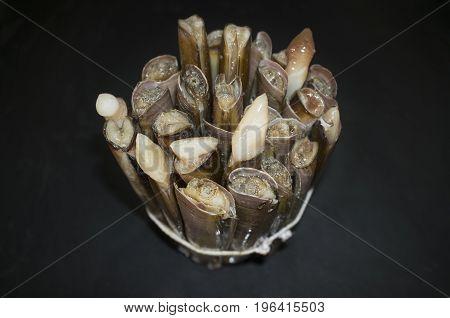 Bundle of razor clams isolated over black slate. Overhead shot.