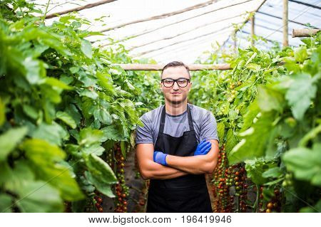 Confident Man Gardener In  Glasses Standing In Greenhouse With Arms Crossed