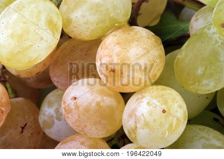 image of many green grapes at day