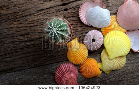 Colorful Shellfish And Small  Cactus.
