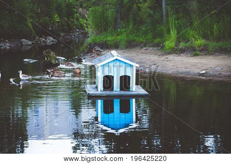 In a small pond near the park, a small and cozy blue house for waterfowl is built, in the basement for the ducks, which are permanent residents there.