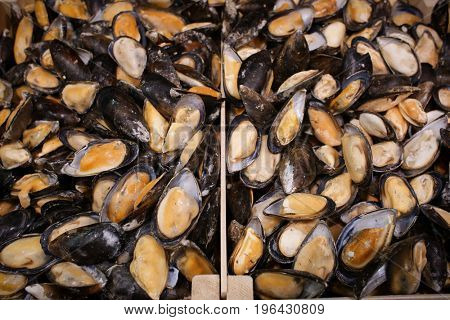 Frozen mussels in fish supermarket