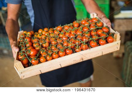 boxes full of fresh tomato vegetables for market at retail. Agriculture