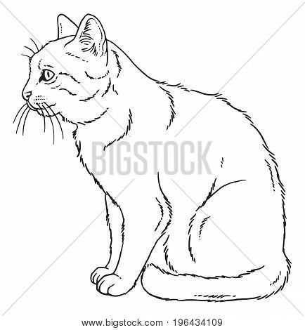 Vector outline sketch of a sitting cat.