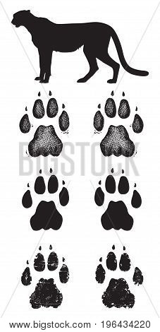 Cheetah tracks: Black and white vector paw prints.