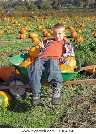 Wheelbarrow With Boy