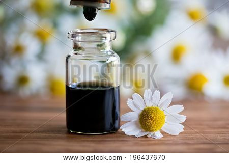 A Bottle Of Chamomile Essential Oil With Fresh Chamomile Flowers