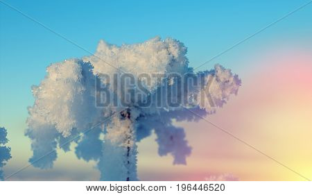 Winter landscape. Frozenned flower. Shallow depth-of-field, frozen landscape,