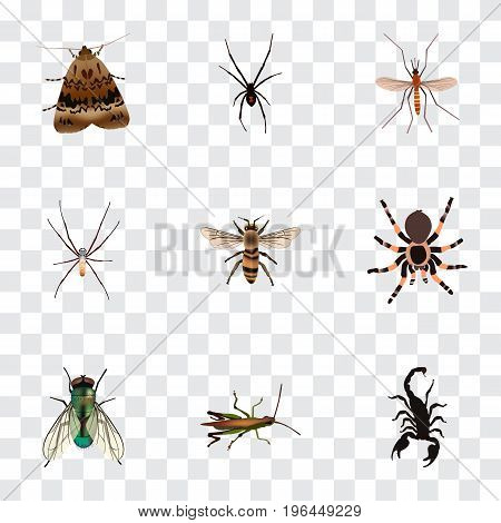 Realistic Wasp, Locust, Housefly And Other Vector Elements