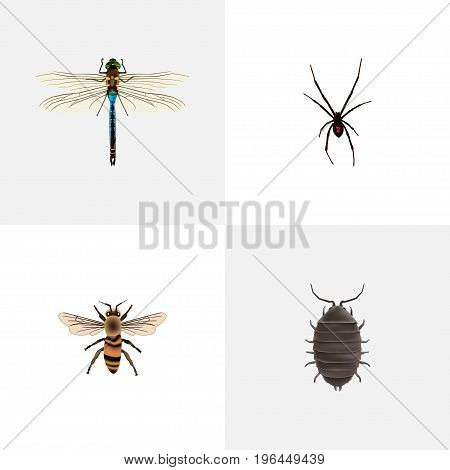 Realistic Wasp, Damselfly, Spinner And Other Vector Elements