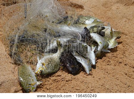 fish in the net on beach sand