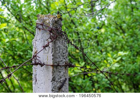 Barbed steel iron wire on a concrete column on the border of the prison