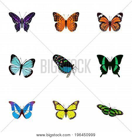 Realistic Beauty Fly, Polyommatus Icarus, Archippus And Other Vector Elements